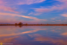 Flooded Rice Fields at Sunset #4