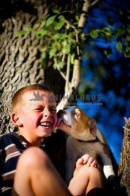 Mixed breed puppy in tree licking young boys face