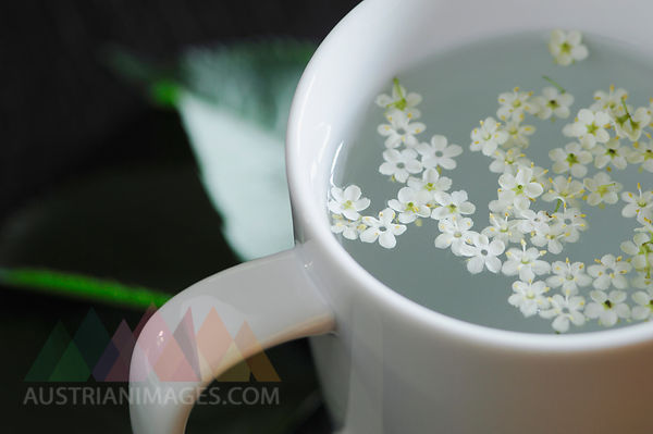 Close up of elderflower in tea cup