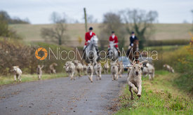 Cottesmore hounds running to camera in Braunston