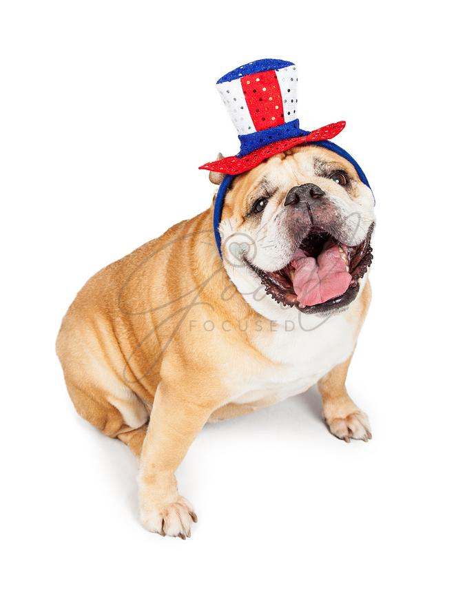 Happy Independence Day Bulldog