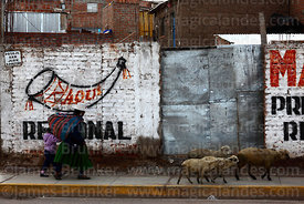 Woman walking her sheep passing political party badge on wall, Puno, Peru