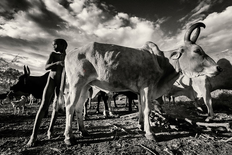 Young Surma Boy with Cattle at Dawn