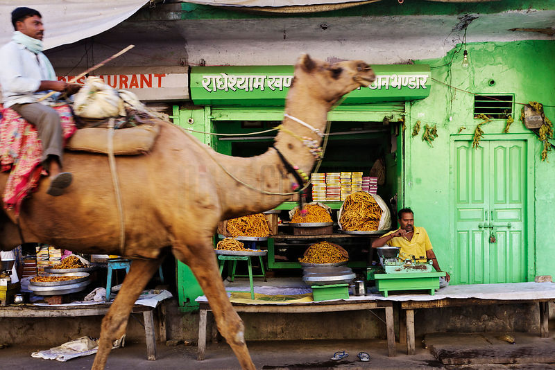 Camel Walking Past Store Front