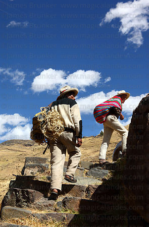 Men arriving with new grass ropes to rebuild the bridge , Q'eswachaka , Canas province , Peru