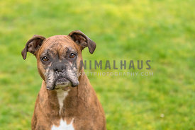 headshot of senior boxer