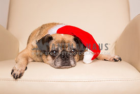 Bored senior pug wearing Santa hat in chair