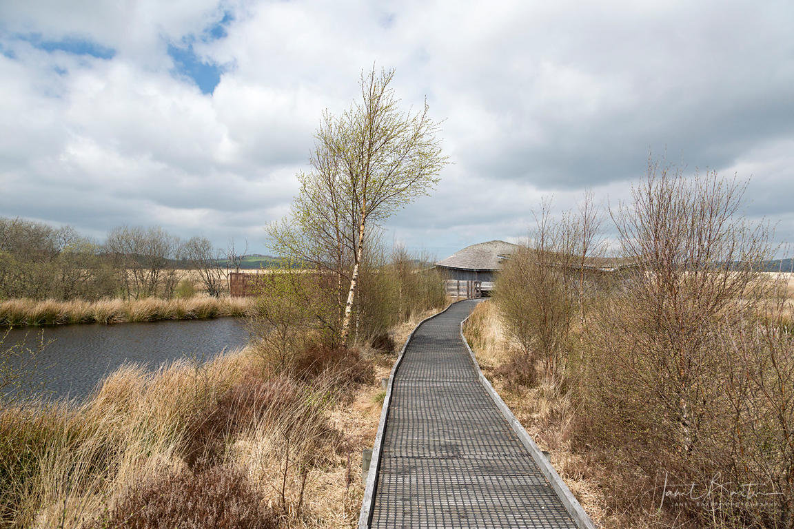 Board walk, Cors Caron
