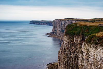 Bempton Cliffs wall decor