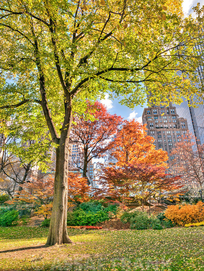 Colours of Central Park