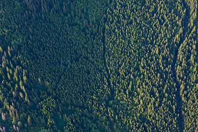 Aerial view of thick mountain forest of Spruce (Picea abies) and Ash (Sorbus aucuparia). Western Tatras, Slovakia, June 2009.