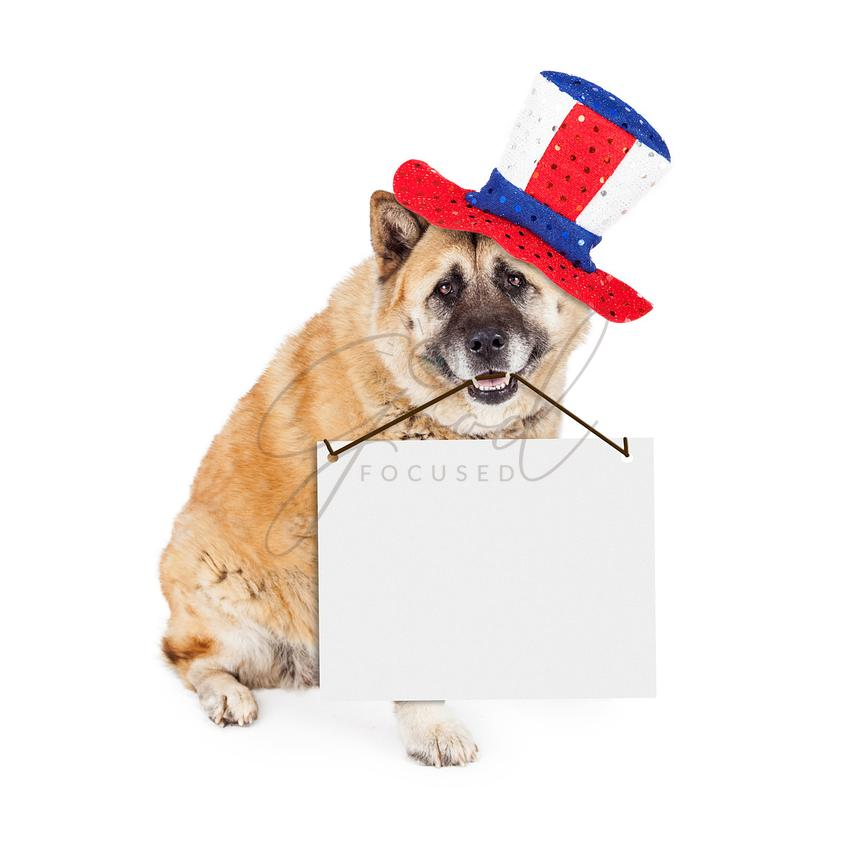 Patriotic American Dog Carrying Blank Sign