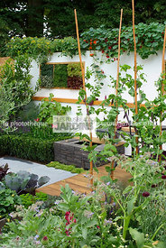 Allotment, garden designer, mangetout, Mini potager, Mini Vegetable garden, Small garden, Urban garden, Vegetable patch, Vege...