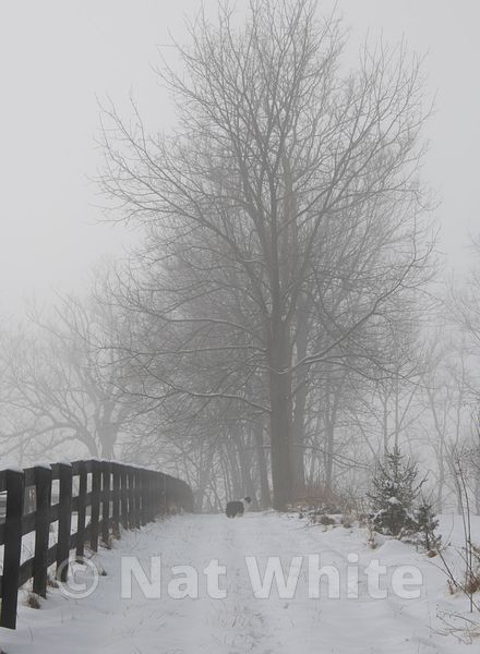 Snow_and_fog-1_February_21_2019_1_1000_sec_at_f_13