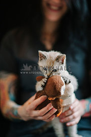 tiny feisty lynx color point kitten held by a young smiling woman grabs hold of his stuffed toy
