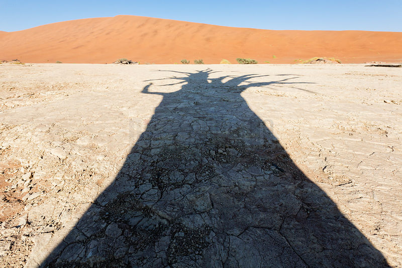 Shadow of an Ancient Camelthorn across the Surface of Dead Vlei