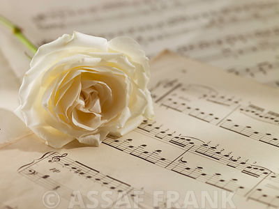 Rose on musical notes sheet