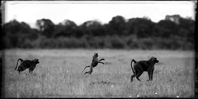 X-Baboon_light_as_air_Kenya_2006_Laurent_Baheux