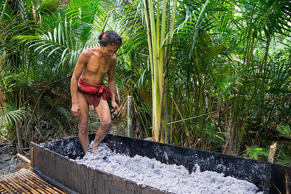 Man crushing sapoutier pulp with his feet to make sago flour, basic nourishment to the Mentawai people, Pulau Siberut, Sumatr...