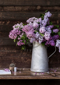 Lilac by bauer