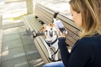 Blonde woman taking a photo of her dog with her cell phone