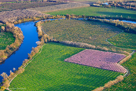 Peach Orchards and Feather River