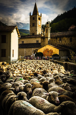 Sheep festival in La Brigue, France - 2014
