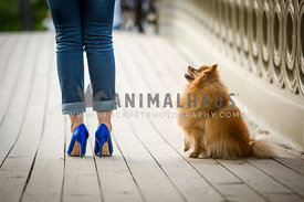 blue heel shoes and dog on bridge