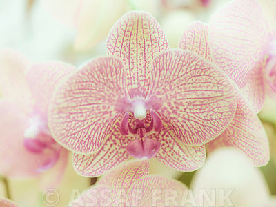 Orchid flowers close-up
