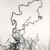 JJB-vegetaux09Impression