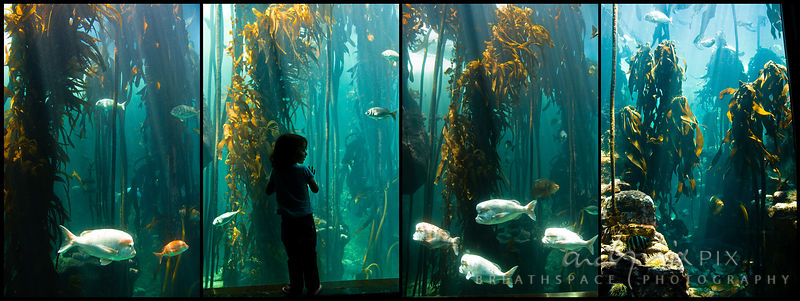 Two Oceans Aquarium, Cape Town, South Africa. A little girl looks through the glass at the Fish swimming through the kelp for...