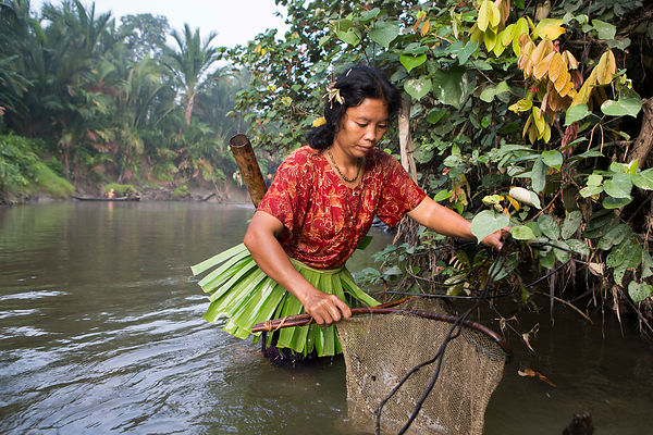 Woman fishing with landing net, banana leaf loin cloth is used to attract fish and small crustaceans, Pulau Siberut, Sumatra,...