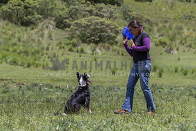 dog trainer with tricolour Border Collie
