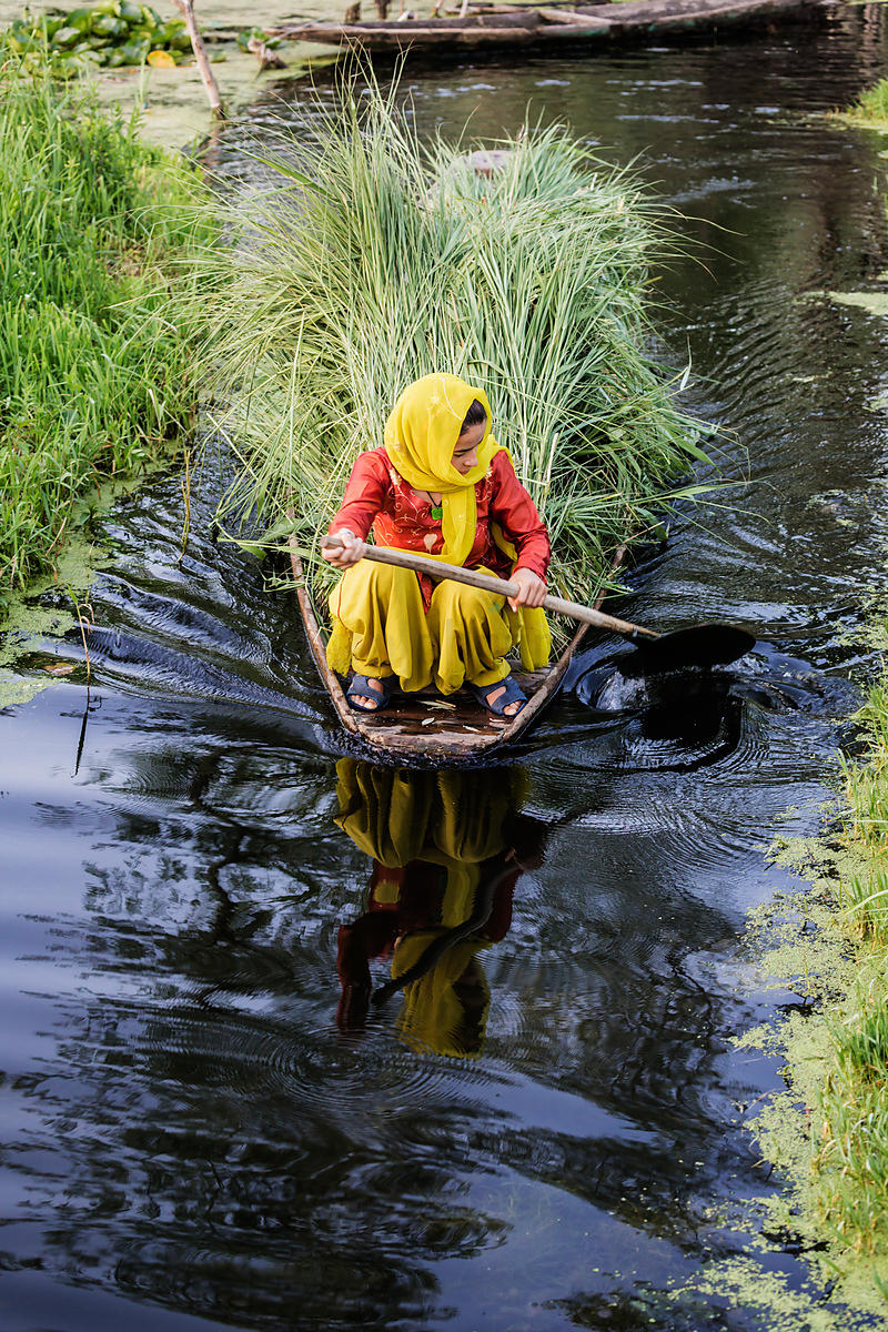 Woman Paddling a Shikara Filled with Lotus and Grass