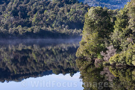 Morning mist and reflections along the very still Gordon river, Franklin - Gordon Wild Rivers National Park, Tasmania, Austra...