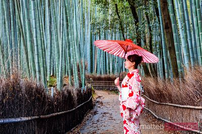 Japanese woman with umbrella at bamboo grove, Kyoto