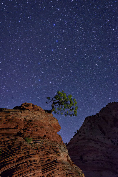 Lone Tree and the Big Dipper