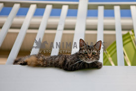 cat laying outside on balcony with blue sky
