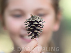 Young girl (Charlotte Tipling) holding pine cone Norfolk autumn (Model released)