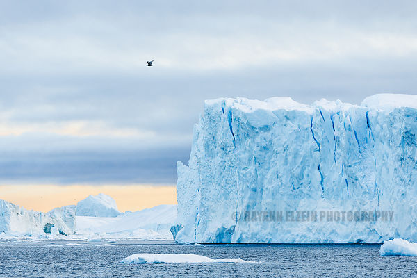 A bird flies through the scene in front of a large iceberg in Ilulissat