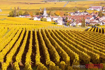 Autumn vineyards, Oger, Champagne Ardenne, France