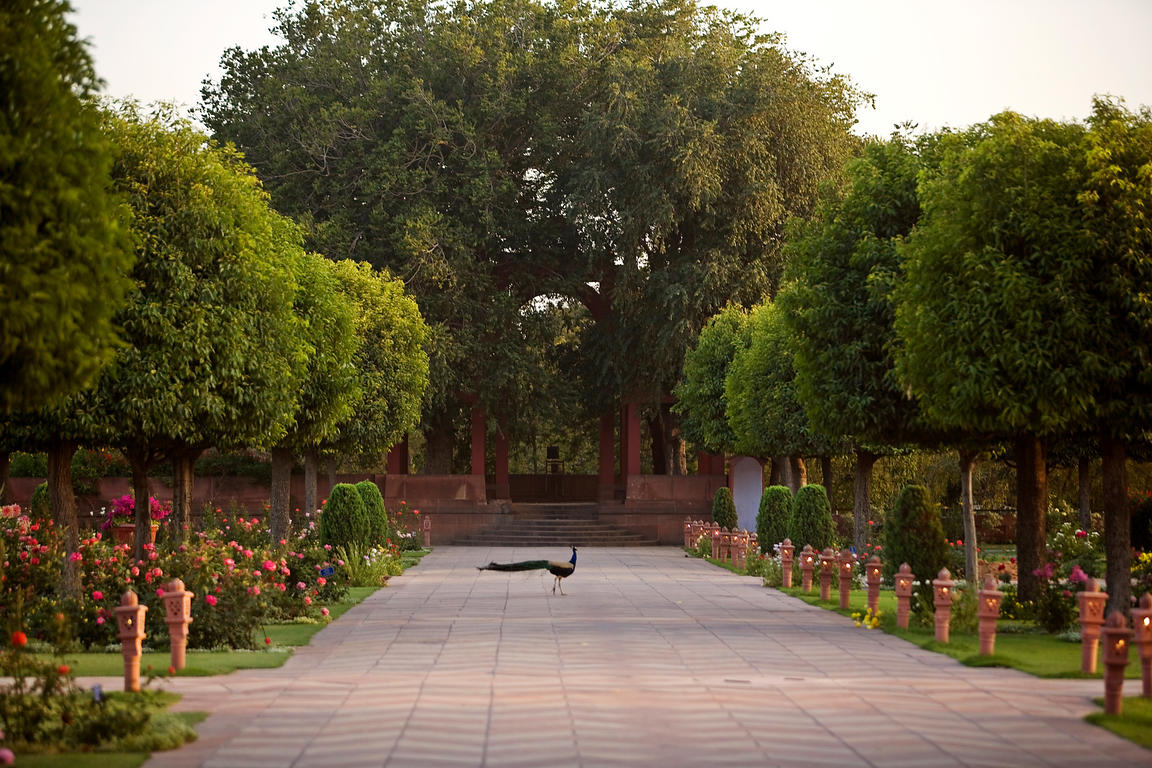 A peacock in the gardens of Rashtrapati Bhawan