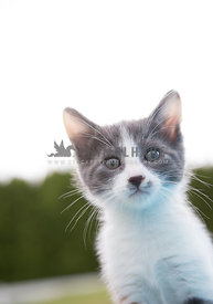 Small kitten outside against sky