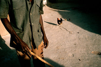 Anafo and his favourite rooster