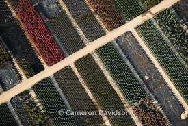 Aerial photograph of rows of palnts in a greenhouse
