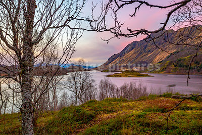 Beautiful view across a fjord with a heather strewn foreland and pink sky