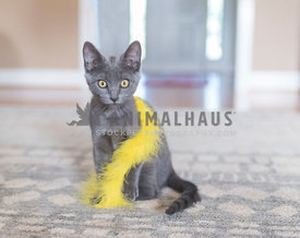 gray kitten with a yellow feather boa
