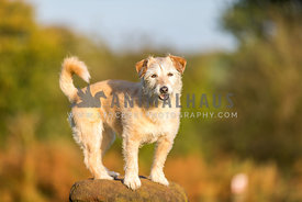 Small dog standing on rock