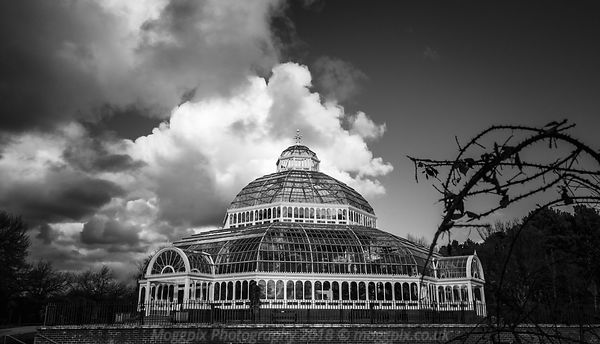 Palm House in Monochrome