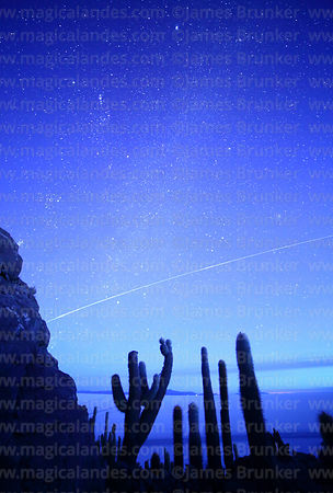 International Space Station passing above Echinopsis atacamensis (pasacana subspecies) cacti before dawn, Incahuasi Island, S...